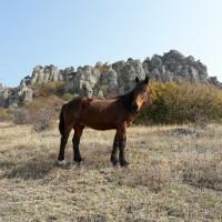 """Экскурсия """"Конные прогулки по Долине Привидений"""""""