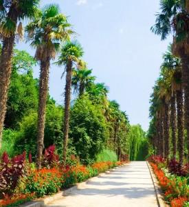"""Экскурсия """"Никитский ботанический сад"""""""